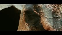 Akbar tames a Wild Elephant | Jodhaa Akbar